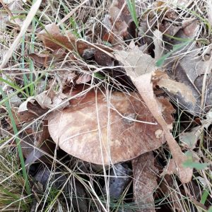 Funghi E Castagne (2)