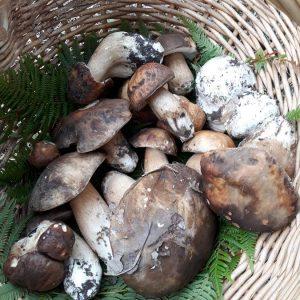 Funghi E Castagne (3)